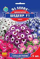Цинерария цветущая Шедевр F1 смесь комнатное растение отличается обильным ярким цветением, упаковка 5 шт