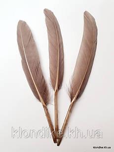 Перья декоративные, 11-14 см, Цвет: Темно-бежевый (10 шт.)