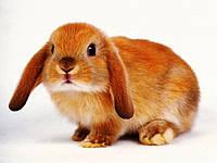 Корм для кролика и свинки