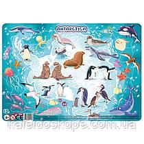 Пазл Dodo с рамкой Антарктида
