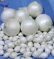 Лук голландский Сноубол севок средне ранний, для осенней и весенней посадки, белый