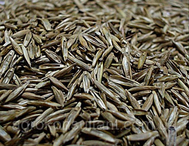 Семена газонной травы Универсальная, от 1 кг.    Норма посева: 5 кг на 100 м2