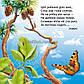 Хто сховався в лісі? Книжка на картоні / Василь Федієнко / Школа, фото 2