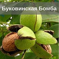 Саженцы грецкого ореха Буковинская Бомба / Привитый