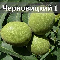 Саженцы ореха Черновицкий 1 (Трехлетний)