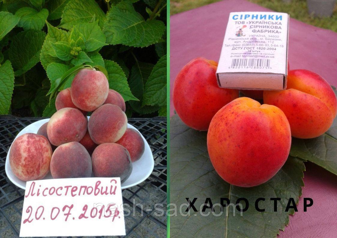 Персик + Абрикос и гибриды плодовых культур