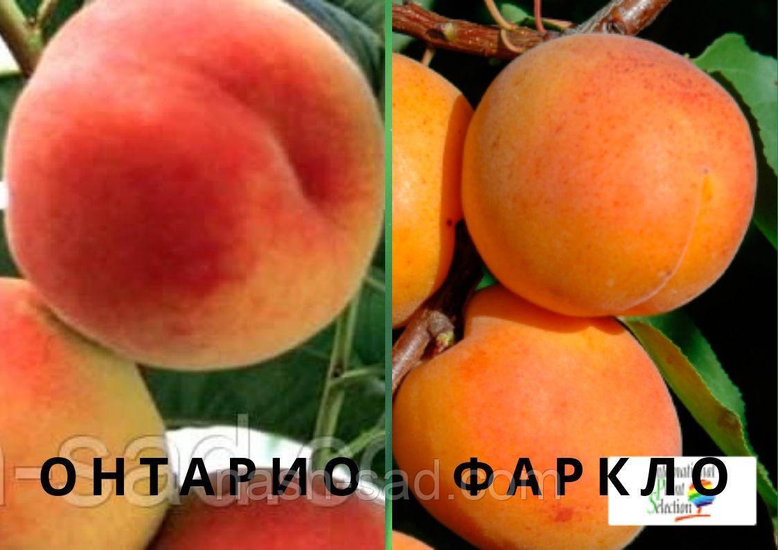 Персик + Абрикос ( 2-я часть )
