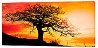 Картина на холсте Декор Карпаты Одинокое дерево 50х100 см, КОД: 962774