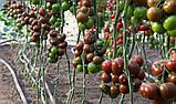 KS 3900 F1 семена томата чёрного Kitano 250 шт, фото 3