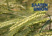 Насіння озимого ячменю Наомі (Saaten Union)