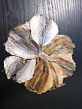 Желтый Полосатик солено- сушеная рыбка  - закуска к пиву (рыбные снеки) 1 кг, фото 2