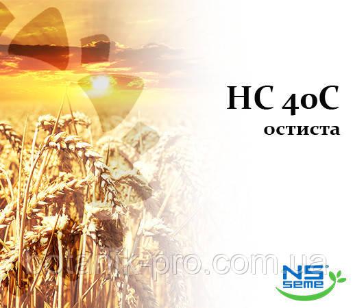 Семена озимой пшеницы НС 40 С 1 репродукция