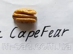 Пекан Cape Fear (однолетний)