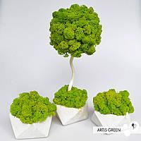 Набор дерево 30 см+2 кашпо с настоящим мхом Fresh Dark