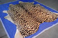 Шкура коровы под ягуара на бежевом фоне, корова крашеная под ягуара, фото 1