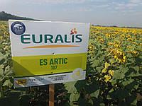 Семена подсолнечника ЕС Артик Евралис