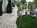 Брекчия мраморная без сетки, белая, фото 6