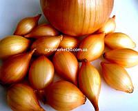 Лук севок желтый продолговатый Голиат 1 кг