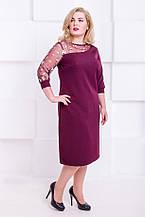 Модное платье с гипюровым плечем Каталина 2 цвета (48-56)