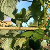 Опоры для растений из композитной арматуры