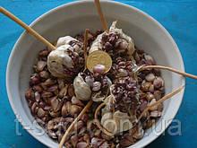Озимый чеснок для посадки Сорт Прометей семена(воздушка)