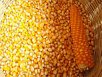 Семена кукурузы P9718Е Пионер (Pioneer)