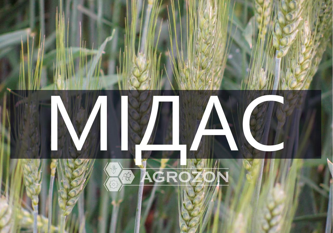 Семена озимой пшеницы сорт Мидас, Мидас, Probstdorfer Saatzucht (Австрія)