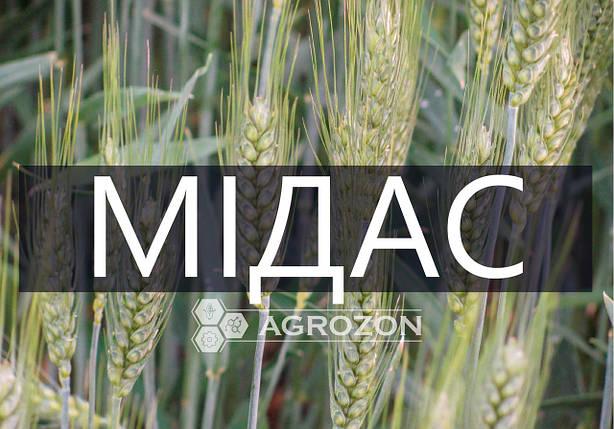 Семена озимой пшеницы сорт Мидас, Мидас, Probstdorfer Saatzucht (Австрія), фото 2