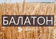 Семена озимой пшеницы сорт Балатон, BALATON, Probstdorfer Saatzucht (Австрія)