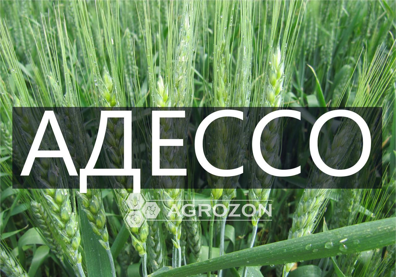 Семена озимой пшеницы сорт АДЕССО, Probstdorfer Saatzucht (Австрія)
