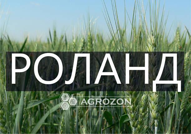 Семена озимой пшеницы сорт Роланд, Probstdorfer Saatzucht (Австрія), фото 2