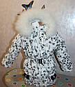 Зимний комбинезон +куртка на девочку 4-5лет натуральная опушка (писец-Белый альбинос), фото 2