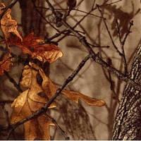 Ткань мембранная камуфлированная Алова (Alova)