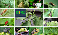 Насекомые-вредители, как главная угроза современному урожаю