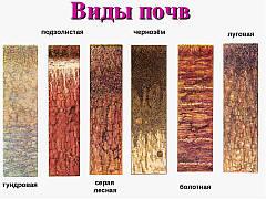 Основные характеристики и виды почвы
