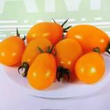 KS 3690 F1(КС 3690) 10 шт насіння низькорослого жовтого черрі Kitano Seeds, фото 3