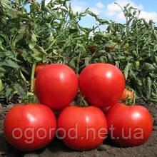 Аніта F1 насіння томату низькорослого Kitano Seeds 500, 1000 шт