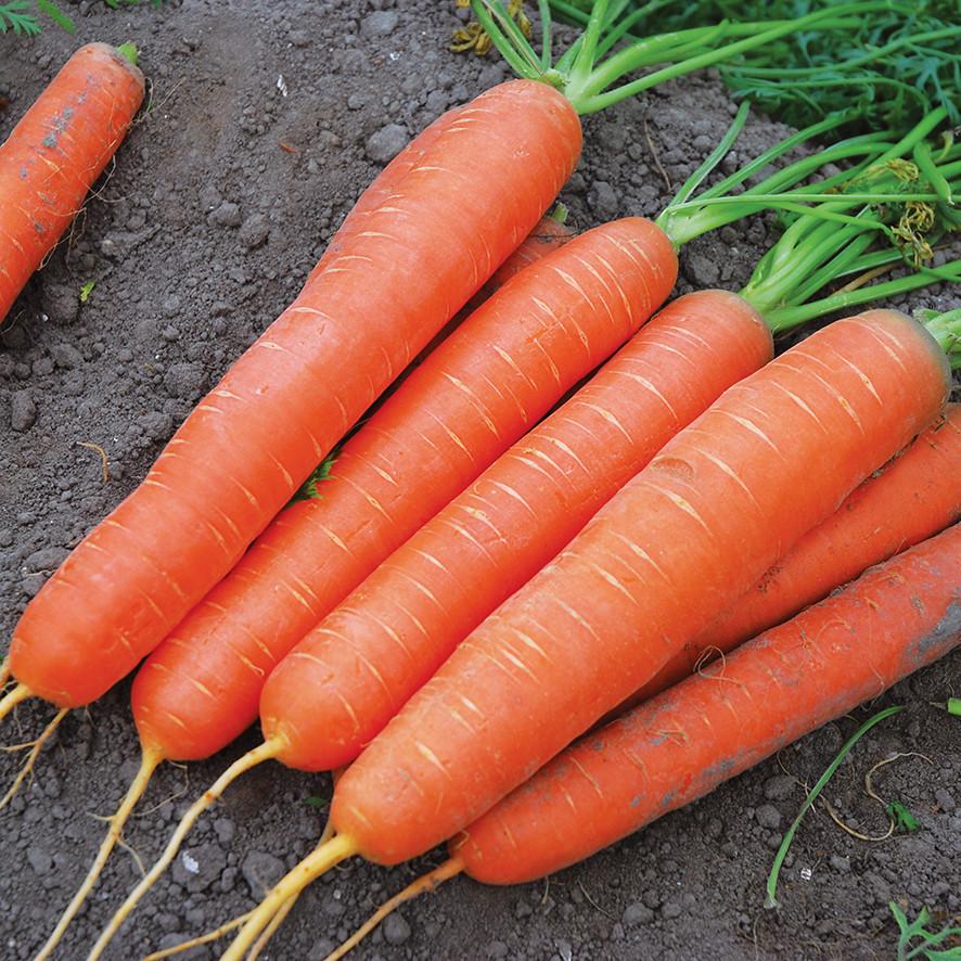 Семена моркови Сатурно F1 (25 000 сем.)