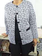 Пиджак женский размер 50,52,54,56,58,60, фото 1