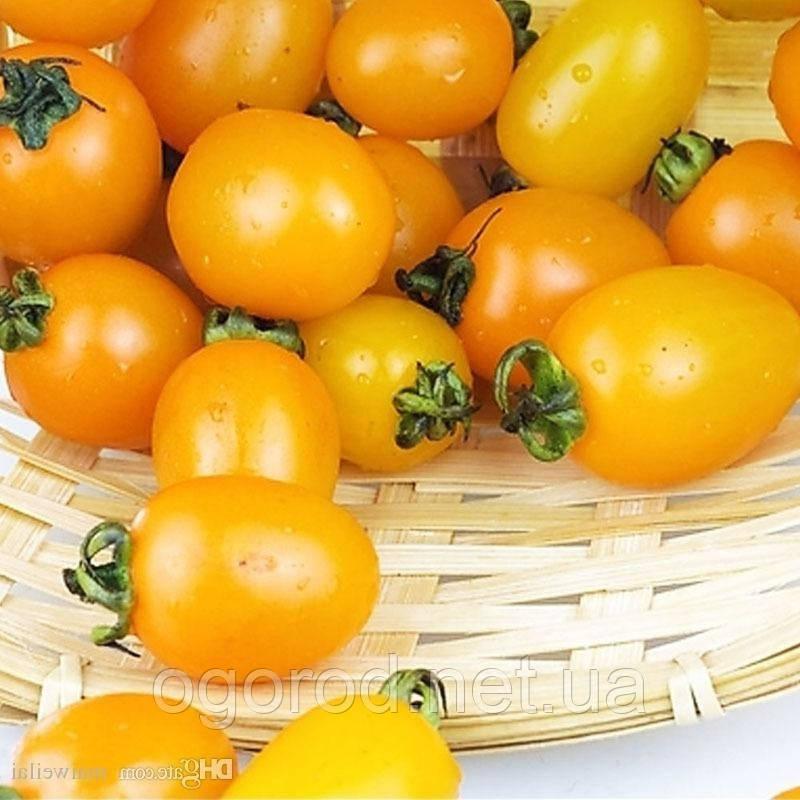 KS 3690 F1(КС 3690) 10 шт насіння низькорослого жовтого черрі Kitano Seeds