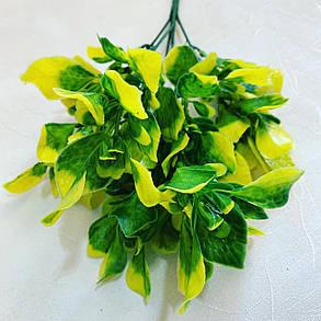 Куст декоративный-капуста.(желтый), фото 2