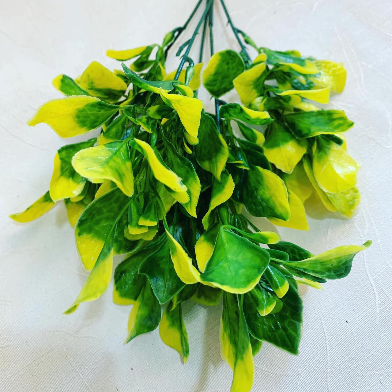 Куст декоративный-капуста.(желтый)