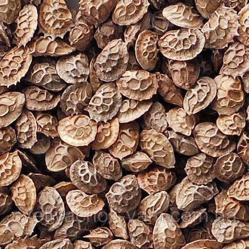 Еспарцет швидко формує зелену масу, хороша стійкість у травостої 3-5 років  Onobrychis, упаковка от 1 кг