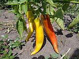 Хуэро(Huero F1) семена перца горького Unigen Seeds США 250 шт, фото 4