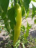 Хуэро(Huero F1) семена перца горького Unigen Seeds США 250 шт, фото 5