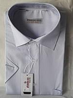 Рубашка мужская с коротким рукавом Ferrero Gizzi vk-0006 белая в полоску классическая