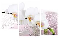 Картина модульная орхидея МD 021