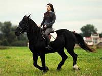 Абонемент на 12 уроков верховой езды + 1 час конной прогулки БЕСПЛАТНО, фото 1