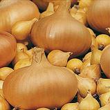 Лук-севок(тыканка) Штутгартер Ризен TOP Onionsets Голландия 100 г, фото 2