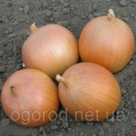 Лук-севок(тыканка) Сеттон TOP Onionsets Голландия 0,1 кг